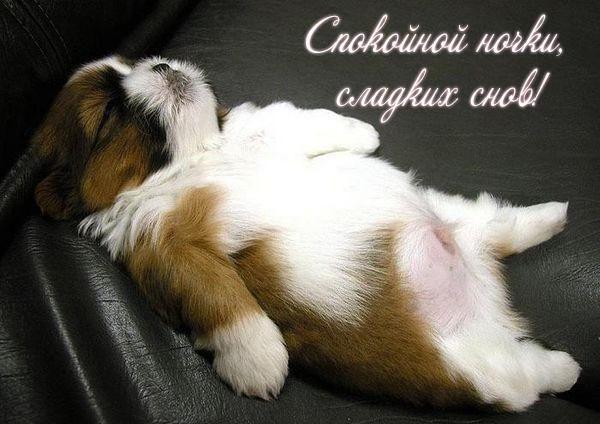 Спокойной ночи собачки картинки и открытки001