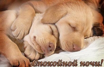 Спокойной ночи собачки картинки и открытки002