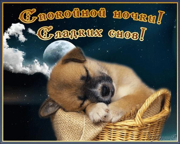 Спокойной ночи собачки картинки и открытки005