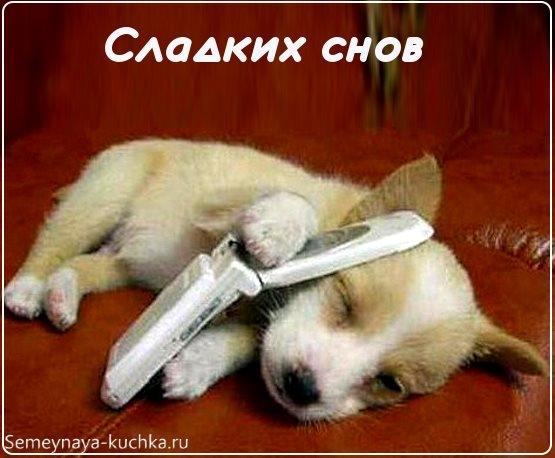Спокойной ночи собачки картинки и открытки006