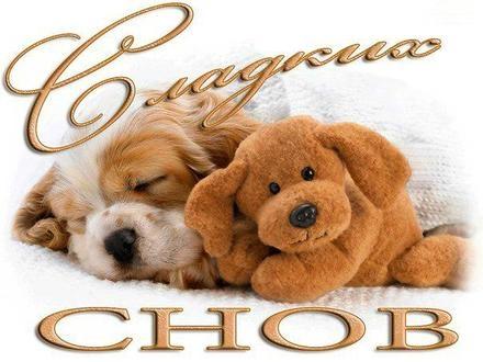 Спокойной ночи собачки картинки и открытки007