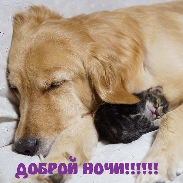 Спокойной ночи собачки картинки и открытки008
