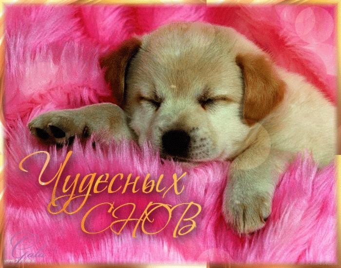 Спокойной ночи собачки картинки и открытки009
