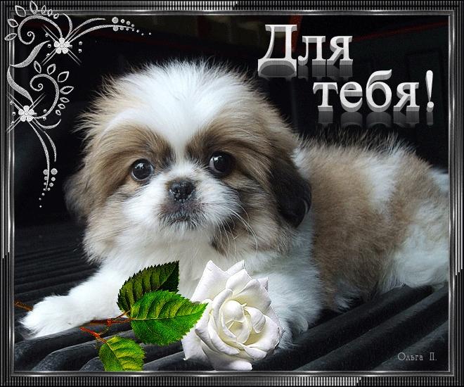 Спокойной ночи собачки картинки и открытки010