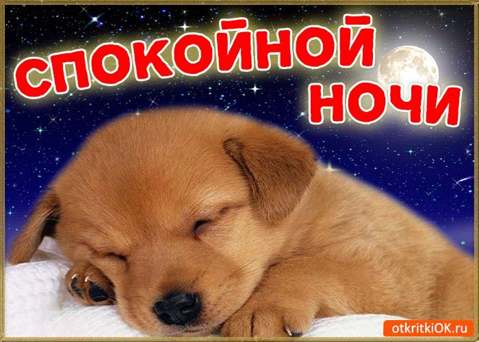 Спокойной ночи собачки картинки и открытки013