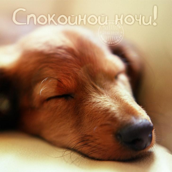 Спокойной ночи собачки картинки и открытки014
