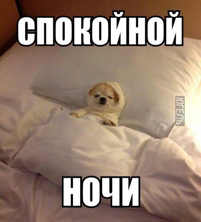 Спокойной ночи собачки картинки и открытки015