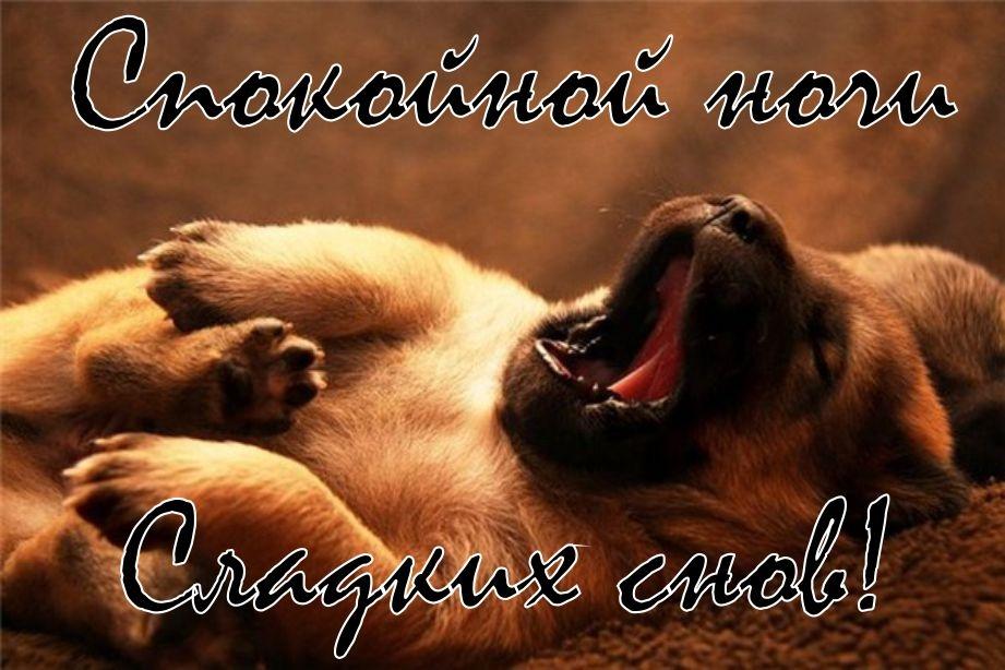 Спокойной ночи собачки картинки и открытки018