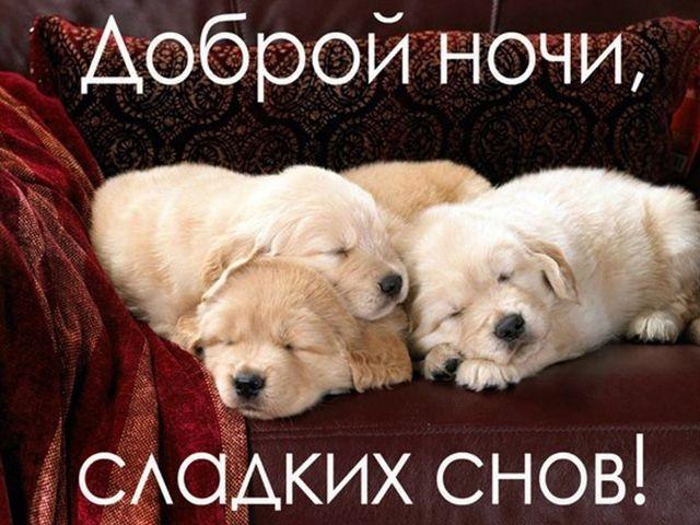 Спокойной ночи собачки картинки и открытки019