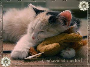 Спокойной ночи юморные картинки и открытки 024