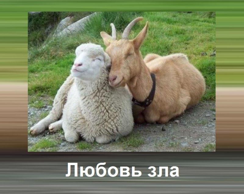 Статусы картинки про любовь и отношения003