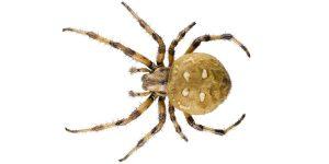 Страшные рисунки пауки   фото, картинки 023