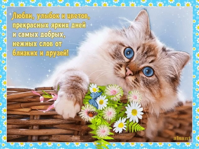 Счастья, добра и мира   прикольные картинки 009