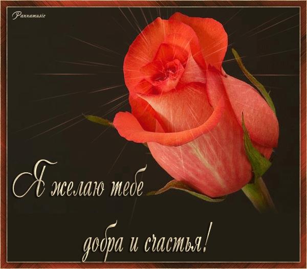 Счастья, добра и мира   прикольные картинки 010