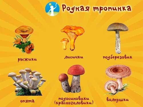 Съедобные грибы   фото с названиями для детей 029