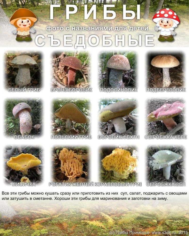 Спокойной осенней, картинки съедобные и несъедобные грибы с названиями