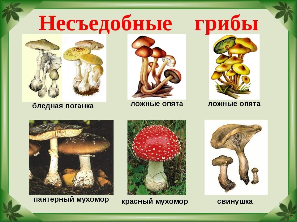 Какие грибы несъедобные фото с названиями режиссера