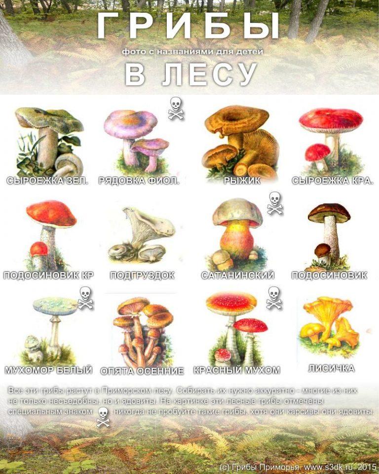 В картинках грибы съедобные и не съедобные