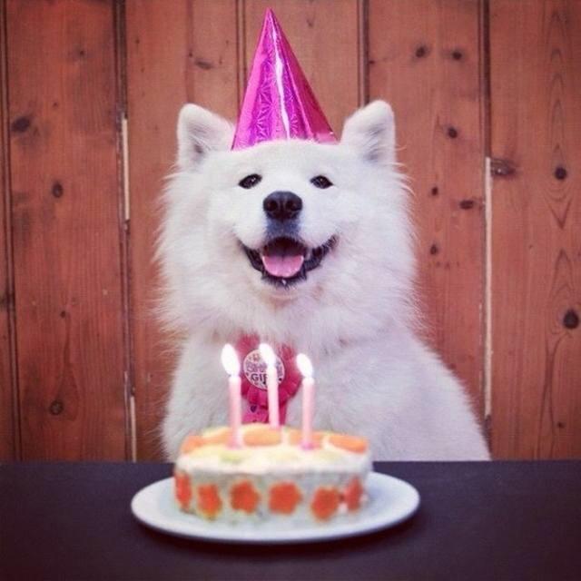 С днем рождения картинки с собаками, днем