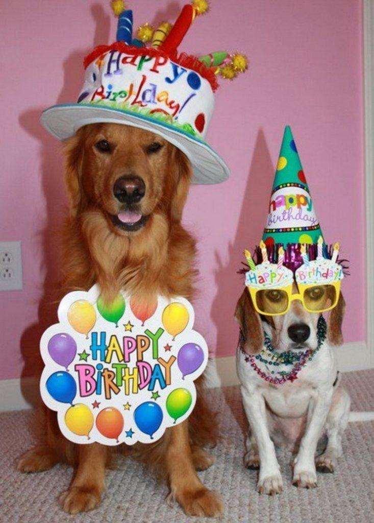 День рождения собаке открытка, поздравления двумя месяцами