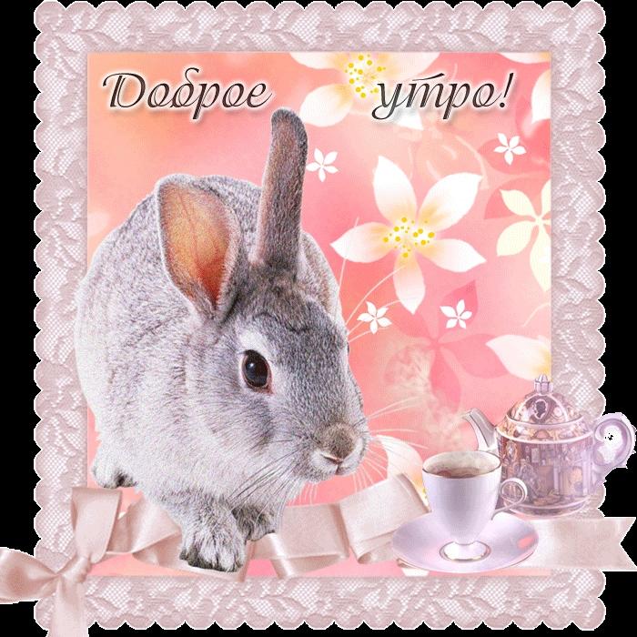 Месяцем совместной, прикольные картинки с зайцами с добрым утром