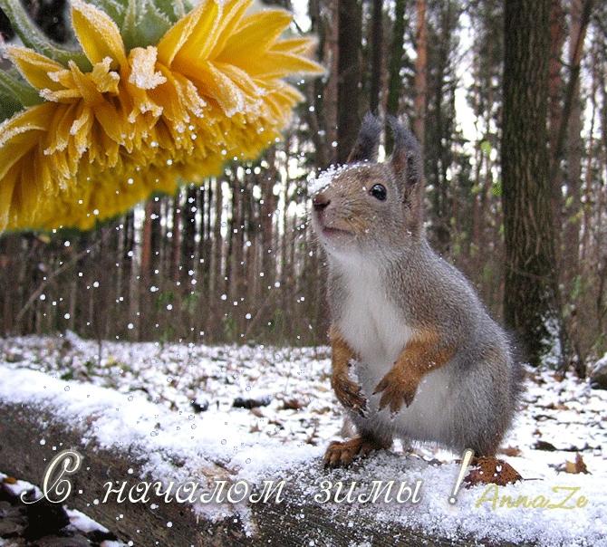 С началом зимы картинки и открытки 015