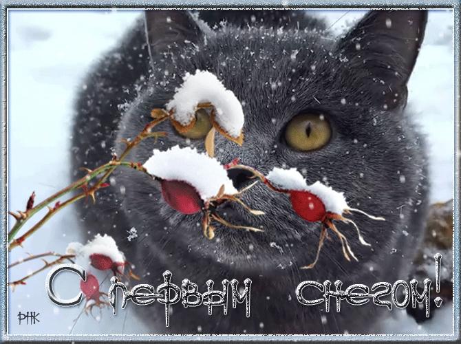 Советские, картинка первый снег смешные