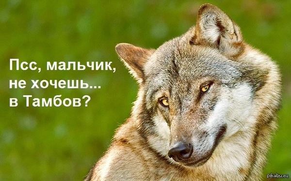Приколы с тамбовским волком фото