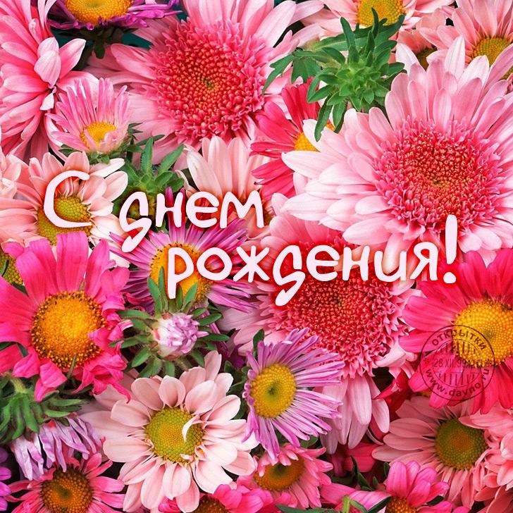 Цветы картинки с др
