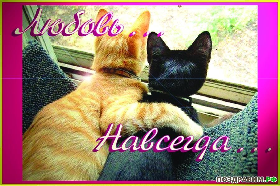 Открытка с кошками люблю тебя, юбилеем лет женщине
