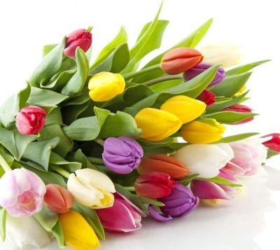 Тюльпаны фото с днем рождения   подборка 004