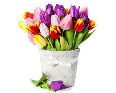Тюльпаны фото с днем рождения   подборка 010