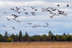 Улетают птицы осенью картинки и рисунки 024