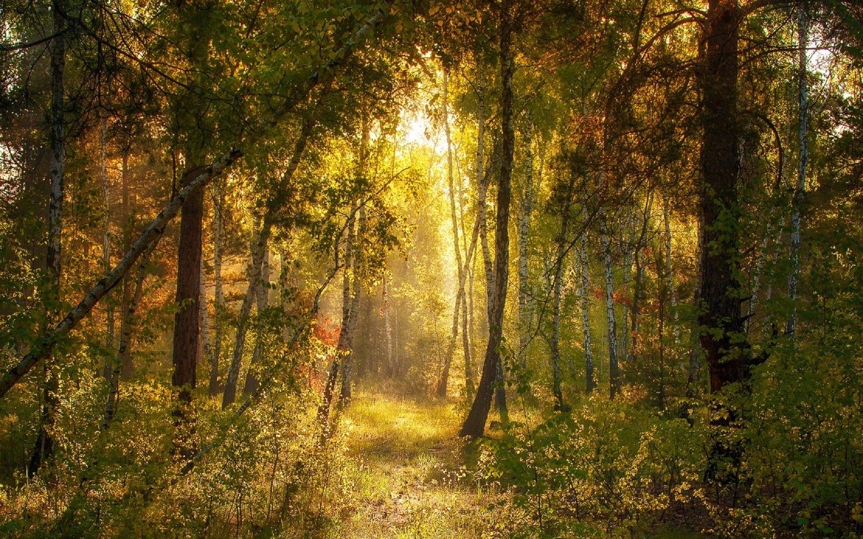 Утро в лесу фото и обои подборка (2)
