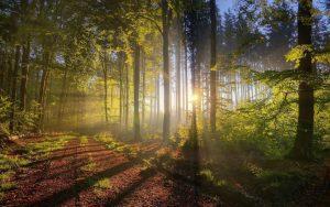 Утро в лесу фото и обои   подборка (24)