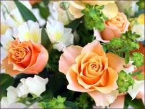 Фон для фотошопа с цветами   скачать 028