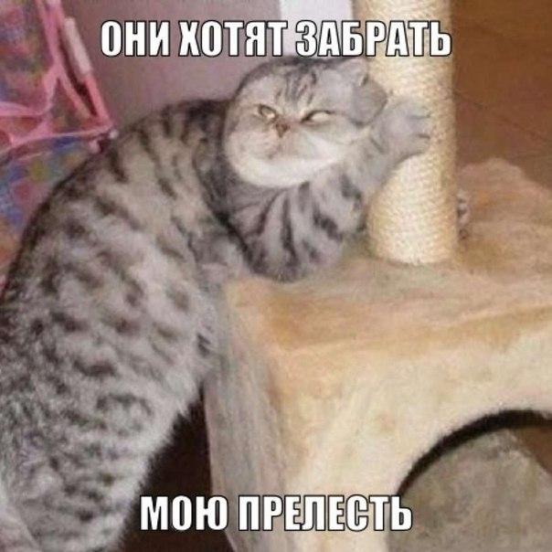 Фотки с кошками прикольные и забавные 029