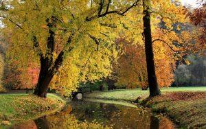 Фотографии про осень красивые 025
