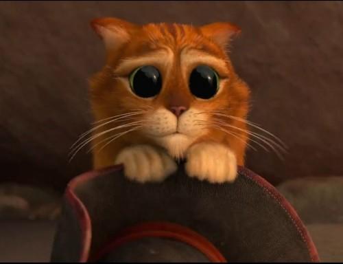 Фото Кот в сапогах с большими глазами подборка (10)