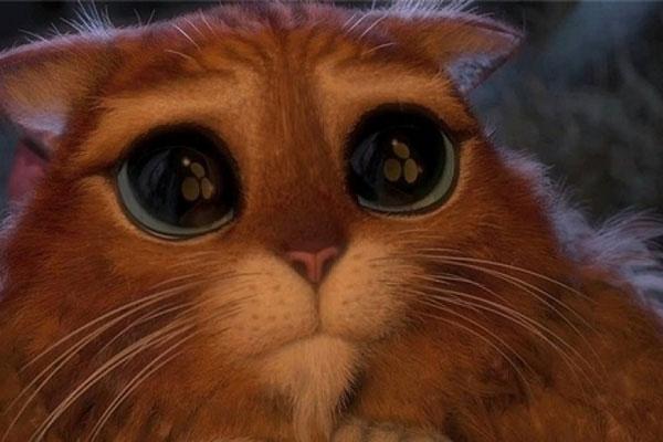 Фото Кот в сапогах с большими глазами подборка (11)
