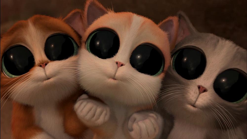Фото Кот в сапогах с большими глазами подборка (13)