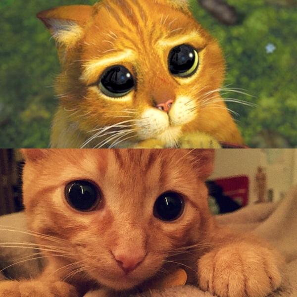 Фото Кот в сапогах с большими глазами подборка (14)