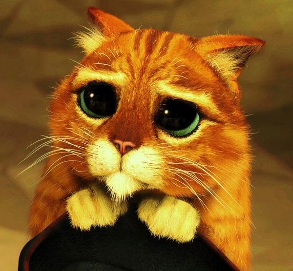 Фото Кот в сапогах с большими глазами подборка (15)
