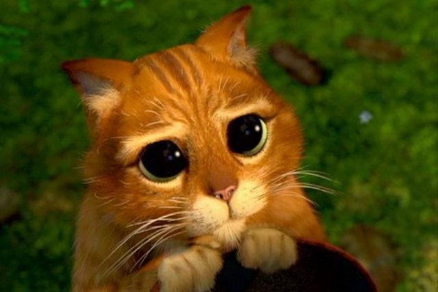 Фото Кот в сапогах с большими глазами подборка (16)
