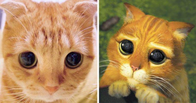 Фото Кот в сапогах с большими глазами подборка (17)