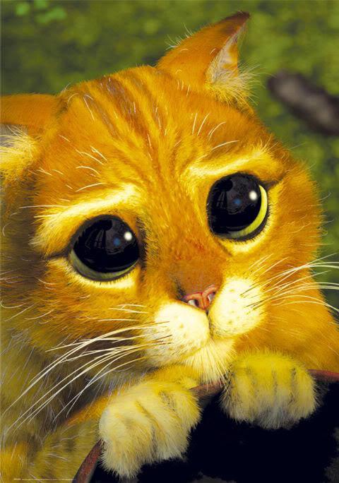 Фото Кот в сапогах с большими глазами подборка (18)