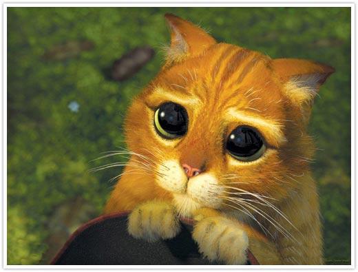Фото Кот в сапогах с большими глазами подборка (2)