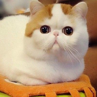 Фото Кот в сапогах с большими глазами подборка (20)