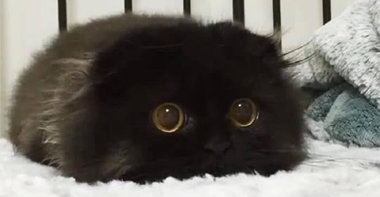 Фото Кот в сапогах с большими глазами подборка (22)