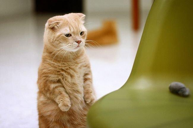 Фото Кот в сапогах с большими глазами подборка (25)